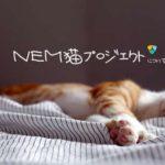 NEM猫プロジェクトとは?仮想通貨ネムで保護猫活動
